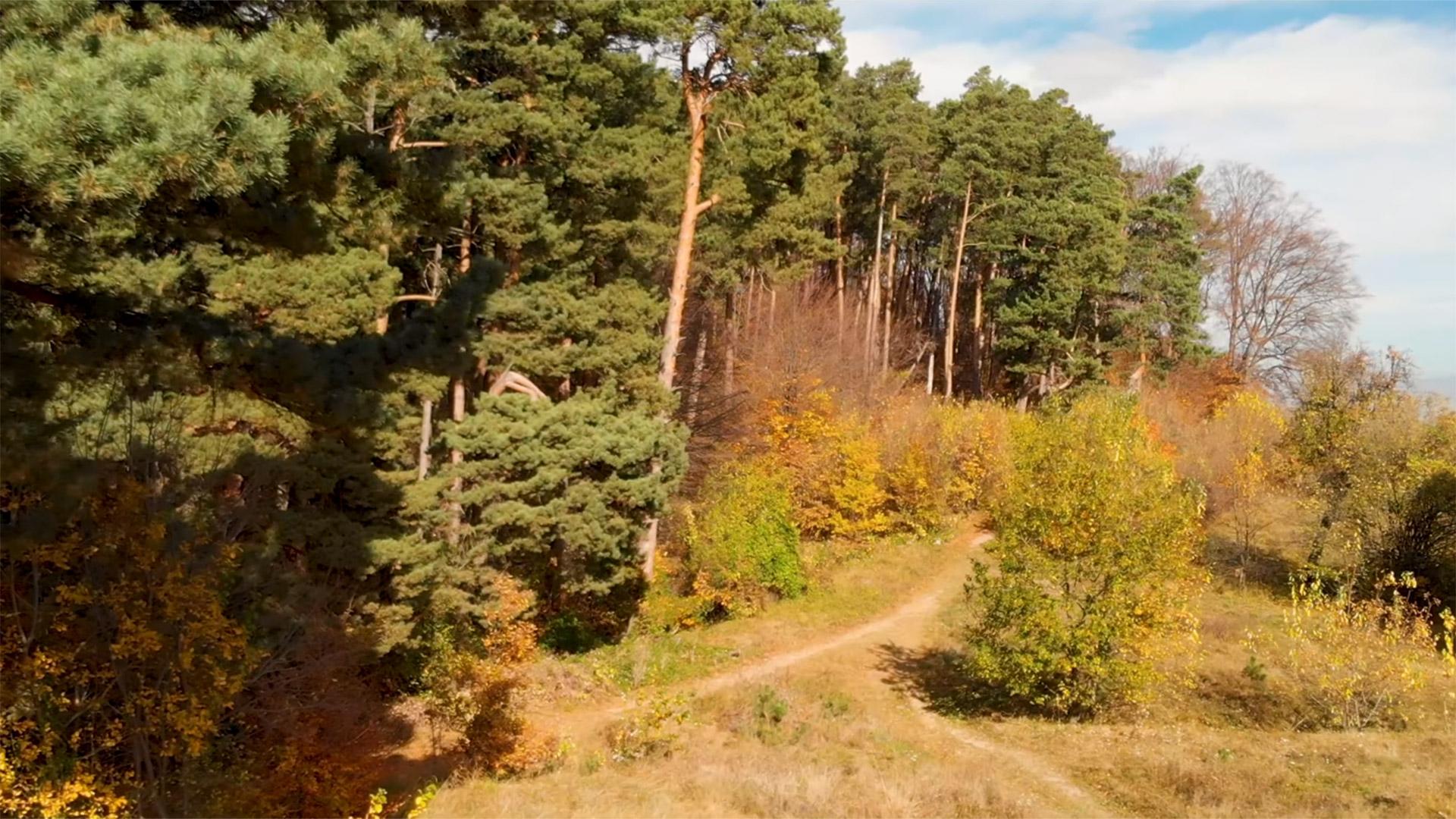 Filmare aeriana cu drona in Brasov